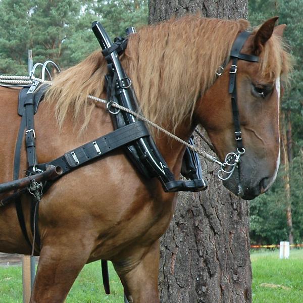 loksele till häst